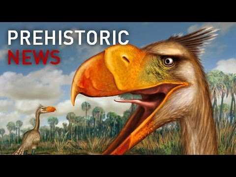 Prehistoric News | Most Complete Terror Bird Ever Discovered