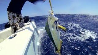 Bahamas Fishing- Mahi Madness (team Sotrad)