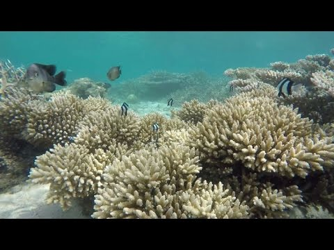 Mauritius' coral reef faces double environmental threat