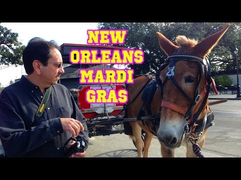 New Orleans Mardi Gras | Traveling Robert