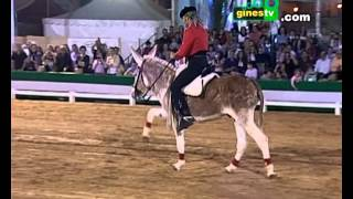 """COMPLETO """"Caramelo"""", el burro que se cree caballo, en la Pará de Gines 2012"""