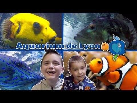 VLOG - Des poissons de toutes les couleurs à l'Aquarium de Lyon