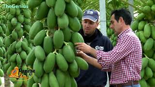 World Ingenious Harvesting Technology, Amazing Agriculture Machines