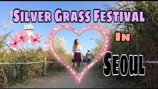 SILVER GRASS FESTIVAL IN SEOUL KOREA