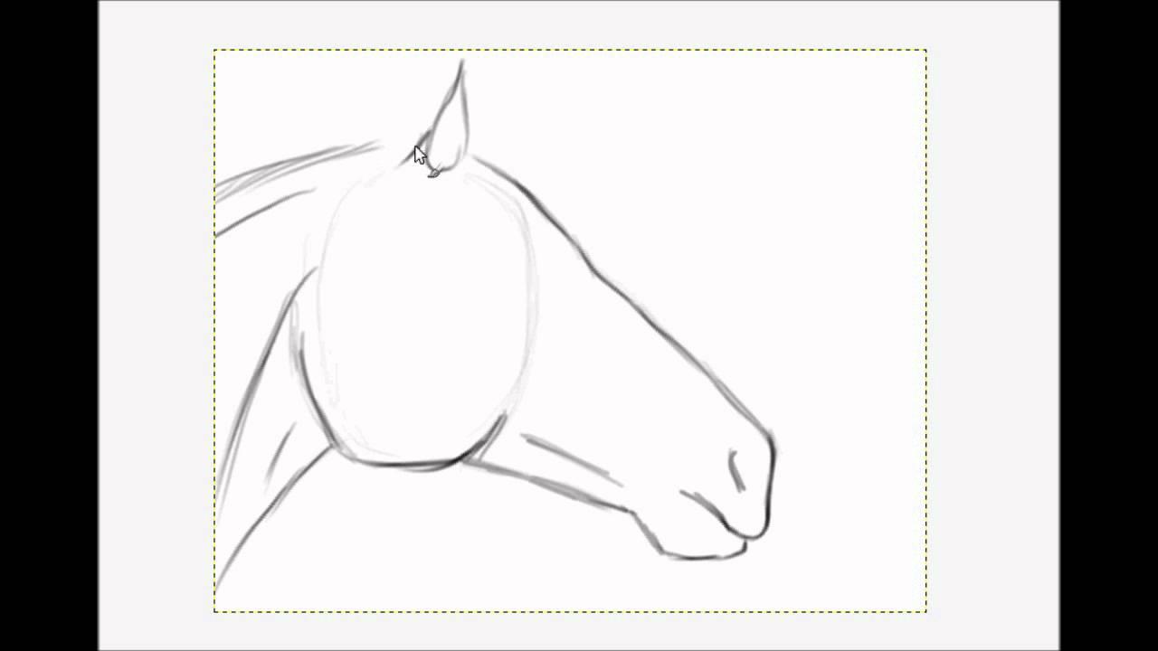 Dessiner une t te de cheval youtube - Cheval a dessiner facile ...