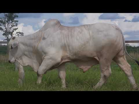 LOTE 004   GPO A 2764