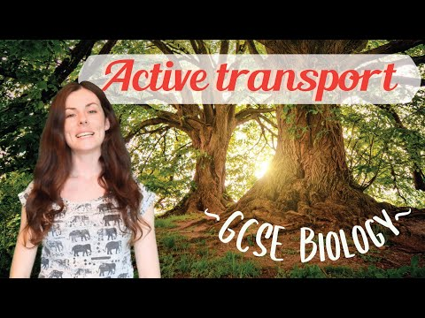 ACTIVE TRANSPORT GCSE Biology 9-1 | Combined Sci (Revision & Qs)
