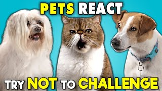 pets-react-to-the-try-not-to-ultimate-challenge-laugh-move-eat