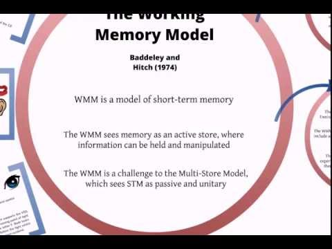 Working Memory Model Revision Tutorial Youtube