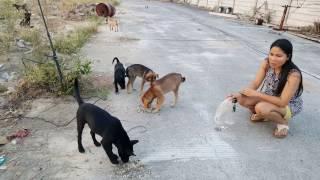 coyote attacks dog
