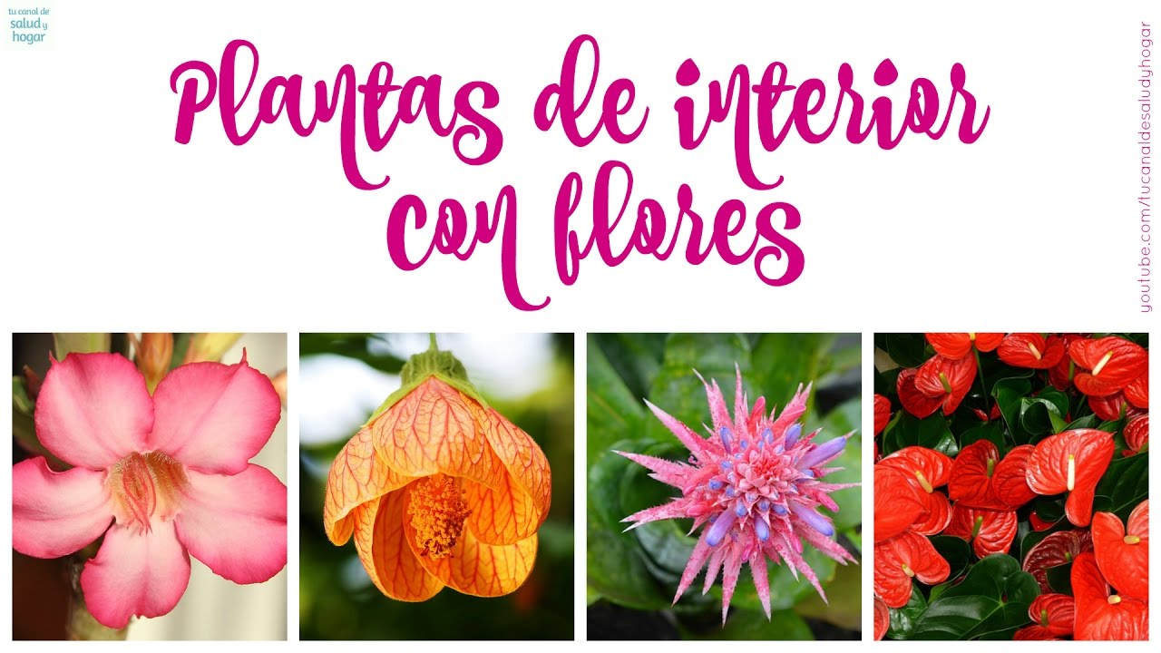 Plantas de interior con flores parte 1 youtube for Plantas de interior duraderas