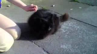I love cats xxx