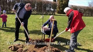 Apfelbaum in Dreiborn