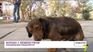 Жизни ребенка, укушенного бешеной собакой, ничего не угрожает(Ребенок, укушенный бешеной собакой в Измаильском районе, находится в нормальном состоянии и его жизни ниче..., 2015-11-27T12:45:02.000Z)