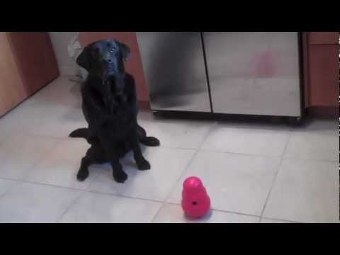KONG Wobbler Dog Toy Review