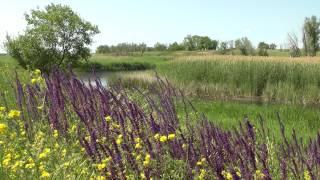 birdsong, <b>steppe flowers</b>, river .. пение птиц, степные цветы, речка ...