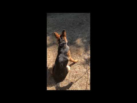 Try Not To Laugh/Dog Compilation/Funniest