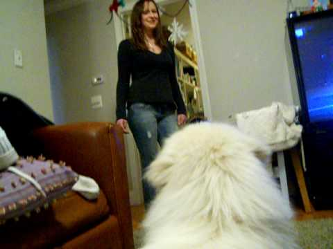 Dog Loves Girl a little to Mch from YouTube · Duration:  50 seconds