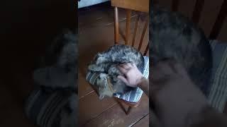 Глубокий сон кота