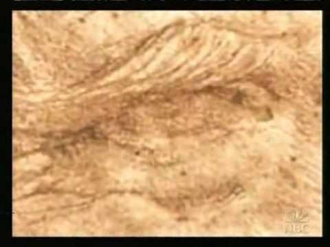 Interactive Leonardo da Vinci NBC interview Renaissance Man DaVinci code