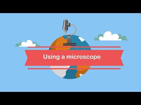 Using A Microscope The Parts And How To Focus