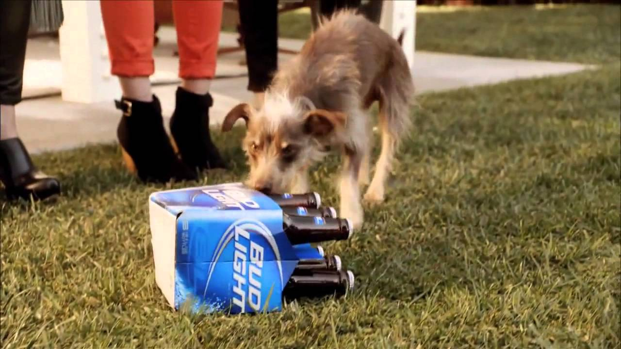 Bud light commercial with dog bud light super bowl ad rescue dog bud light commercial with dog bud light super bowl ad rescue dog youtube 2 mozeypictures Choice Image