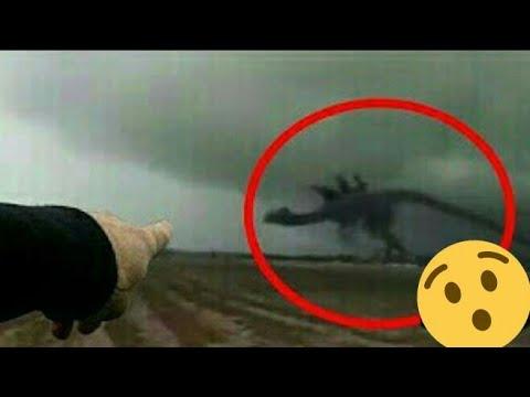 10 Dinossauros Reais Capturados Em Cameras Youtube