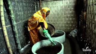 Kazi Shahid Foundation Cattle Lending Program | Teatulia Organic Teas