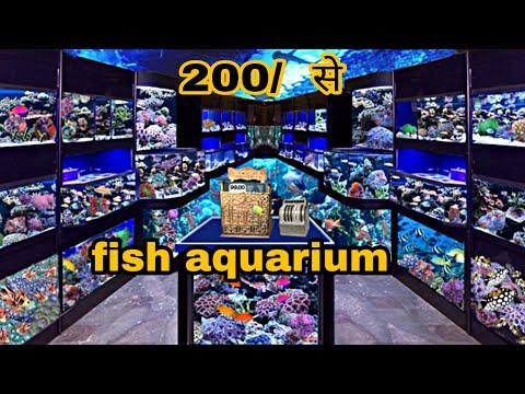 Cheapest Fish Aquarium , Birds And Pet Animal Market In Delhi | Aquarium Staring Price Only 300 Rs.