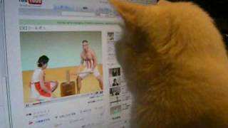 クールポコをなぜかじーっと見ているおいらのネコたん.
