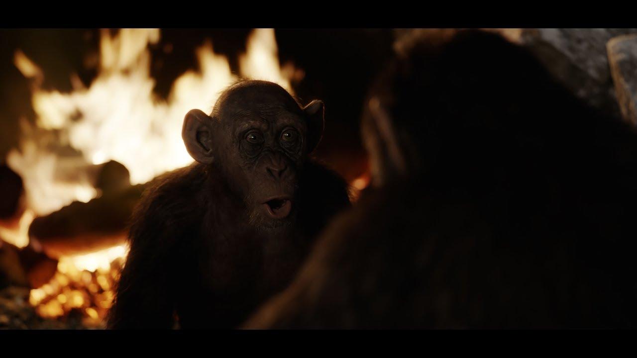 a majom látványa