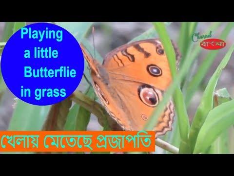Beautiful Butterflies & The Best Relaxing Music