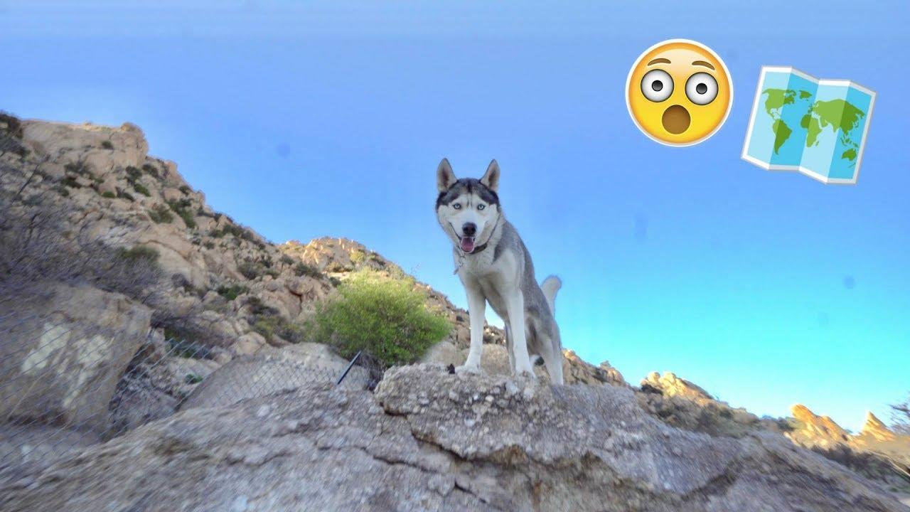 My Husky Goes Sight Seeing!