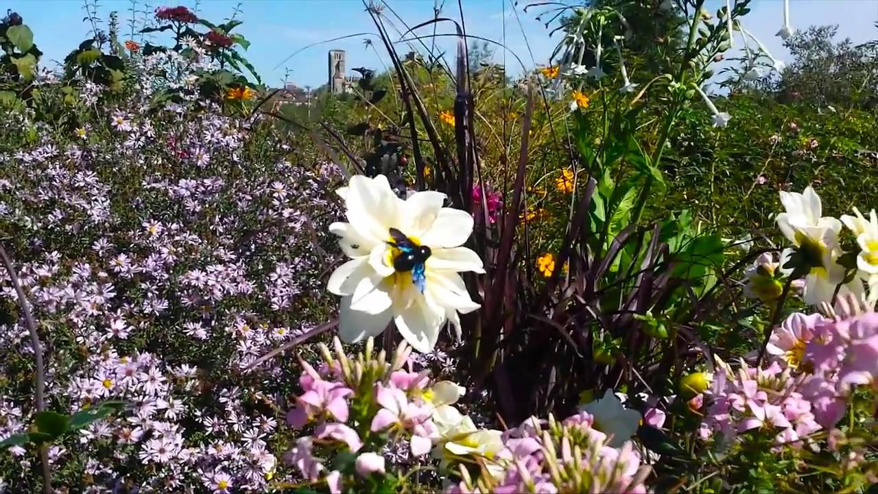 Les Jardins De Coursiana La Romieu Gers 32 Youtube