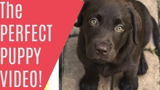 Puppy Training the Perfect Puppy using sit, come, and heel - Purely Positive Puppy Training