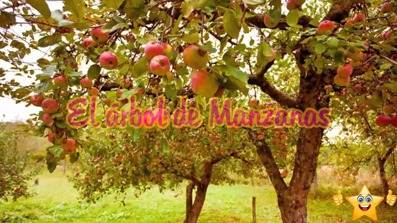 El Arbol De Manzanas Reflexiones Para Meditar Videos De Reflexiones