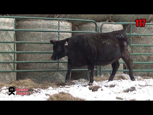 Kaiser Angus Ranch Lot 117