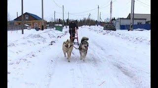 Приютила и дала путевку в жизнь: жительница Шурышкарского района занялась воспитанием ездовых собак