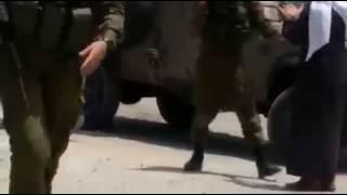 استشهاد فلسطيني برصاص الاحتلال جنوب بيت لحم