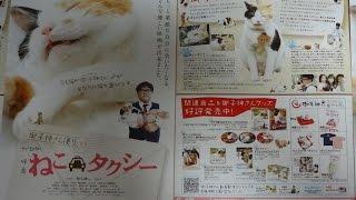 ねこタクシー B 2010 映画チラシ 2010年6月12日公開 【映画鑑賞&グッズ...