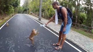 Пробник блога. Тайланд, Пхукет. Подъём на гору обезьян.(Первое видео блога, так называемый пробник. Посетили гору злых обезьян. Было весело и интересно. Делать..., 2016-06-08T15:40:23.000Z)