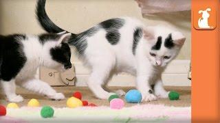 Fluffy Rescue Kittens Love Puff Balls! - Kitten Love