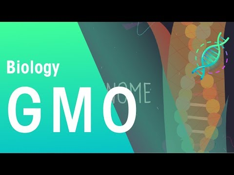 GMOs | Genetics | Biology | FuseSchool