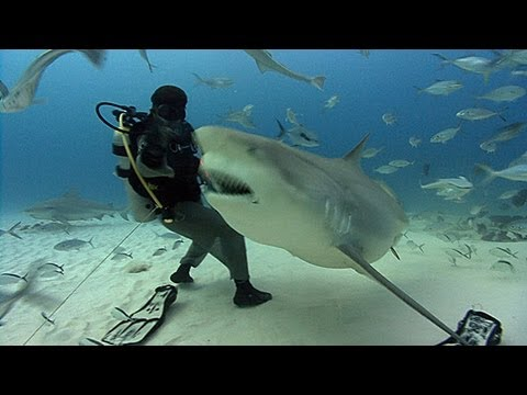 On a Visit to Bull Sharks