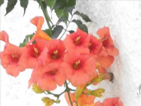 Красивые оранжевые цветы.