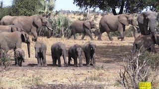 Watch Elephants Enjoy Life In Kruger National Park!