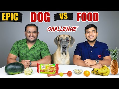 DOG VS FOOD CHALLENGE | FOOD EATING CHALLENGE | Food Eating Competition | Food Challenge