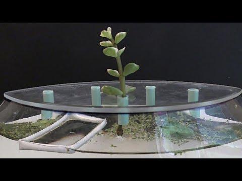 Aquarium Garden Planter