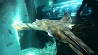 Oregon Coast Aquarium - Guest Dive Program (SCUBA)