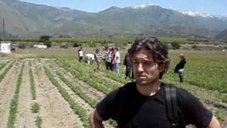 Organic Farm Volunteers